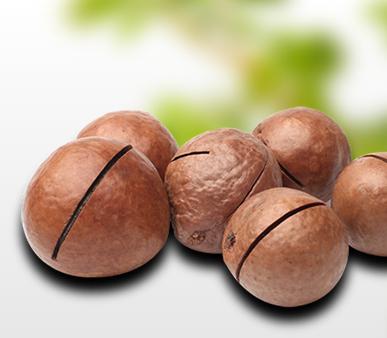 Macadamia Nuts - Macadamia Nuts Business Plan - Multi-Weigh