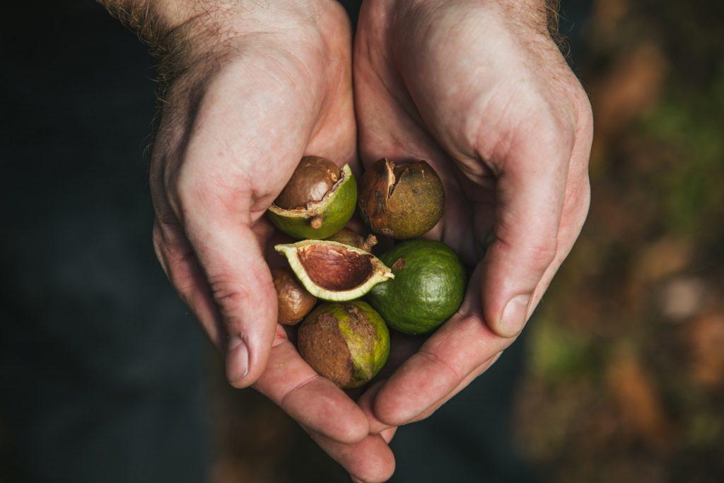 Hand of Macadamia Nuts